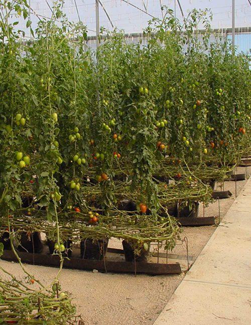 industria agricola - canaletas para hidroponia